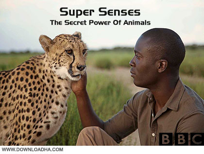 Super Senses cover دانلود فصل اول مستند Super Senses The Secret Power Of Animals Season 1 2014