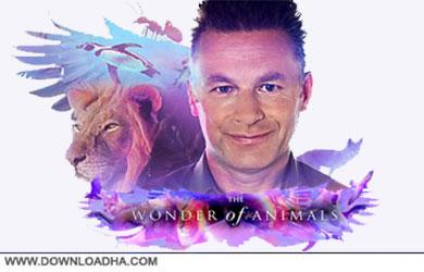 The Wonder of Animals Season 1 cover دانلود فصل اول مستند شگفتی های حیوانات   The Wonder of Animals S01 2014