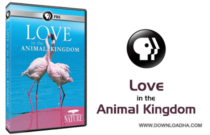 Love in the Animal Kingdom cover دانلود مستند Love in the Animal Kingdom 2013