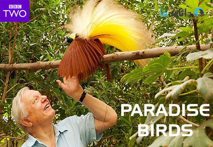 David Attenboroughs Paradise Birds season 1 cover دانلود فصل اول مستند David Attenboroughs Paradise Birds Season 1 2014