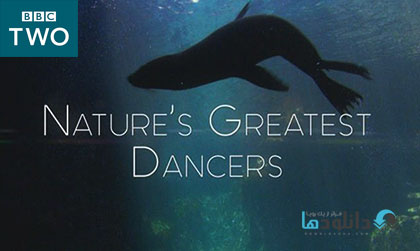 Natures Greatest Dancers season 1 2015 cover دانلود فصل اول مستند Natures Greatest Dancers 2015