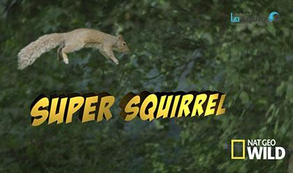 دانلود مستند سنجاب شگفت انگیز – Super Squirrel 2015