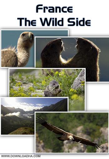 France the wild side cover دانلود مستند حیات وحش فرانسه   France: The Wild Side 2014