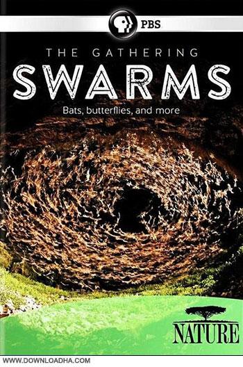 The Gathering Swarms cover دانلود مستند اجتماع حشرات   The Gathering of Swarms 2014
