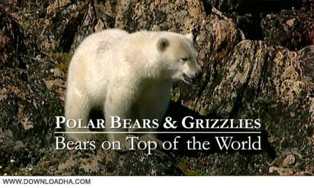Bears on Top of the World 2009 دانلود مستند خرس ها   Bears on Top of the World 2009