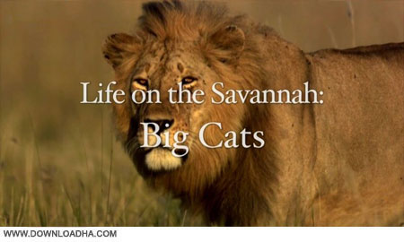 big.cats.2010.cover دانلود مستند گربه های بزرگ   Life on the Savannah: Big Cats 2010