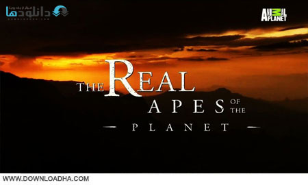 TRA.of.the.Planet.Cover دانلود مستند بوزينه هاي واقعي جهان   Discovery Channel: The Real Apes of the Planet 2014