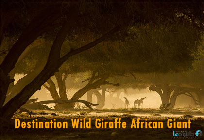 Destination-Wild-Giraffe-African-Giant-2016-Cover