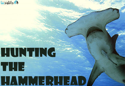 Hunting-The-Hammerhead-2015-Cover