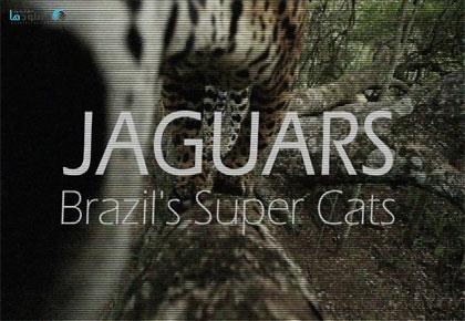 Jaguars-Brazils-Super-Cats-2016-Cover
