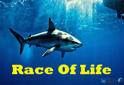 Race-Of-Life-2016-Cover