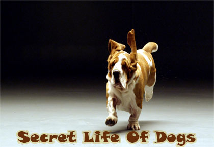 Secret-Life-Of-Dogs-2013-Cover