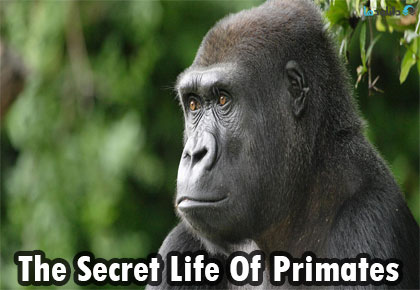 The-Secret-Life-Of-Primates-2009-Cover